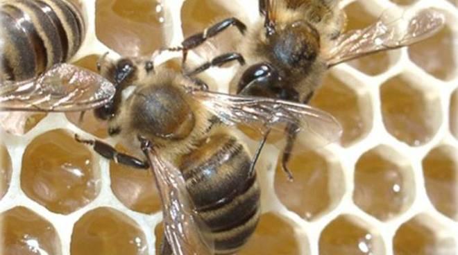 alveare miele