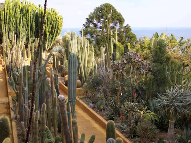giardino esotico pallanca