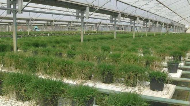 fiori piante serra