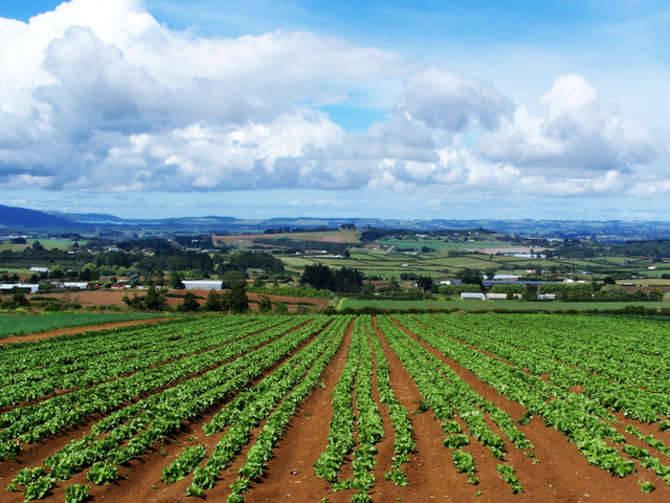 Agricoltura generica