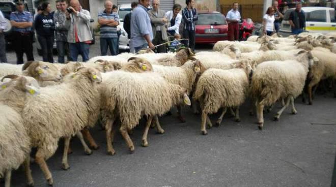 Alcuni momenti del palio delle capre