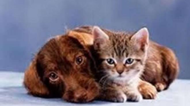 veterinario di turno generica