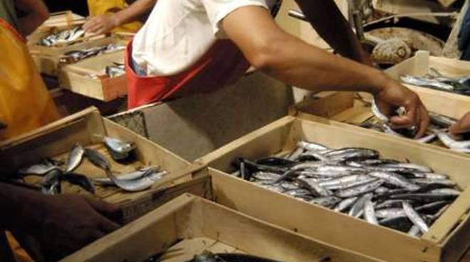 pescatore cassette di pesce pesca ittico generica