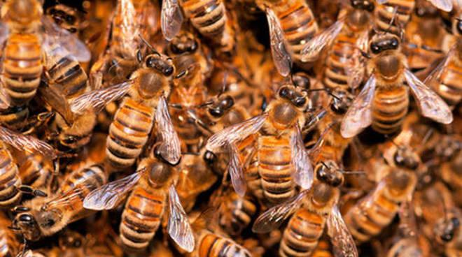 Sciame api generica