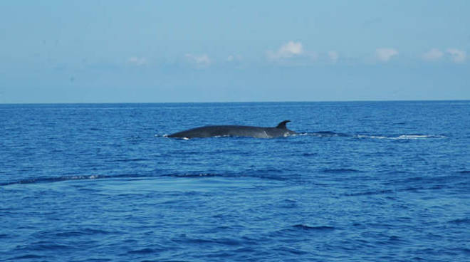 Avvistamento cetacei balena whale watching generica