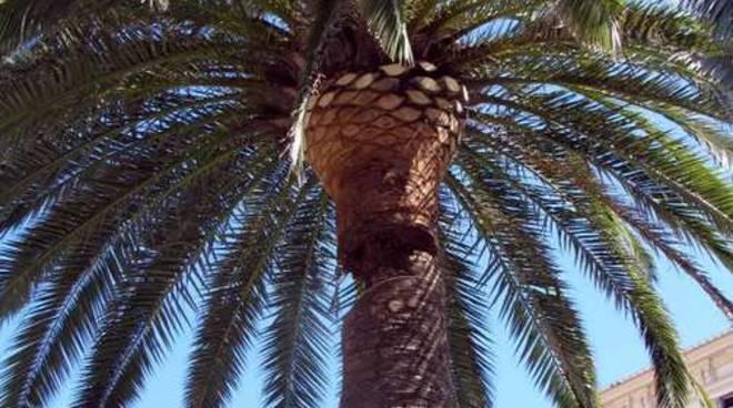 Palma abbattuta piazza eroi
