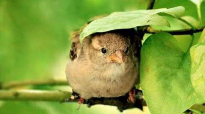 Uccellini generica
