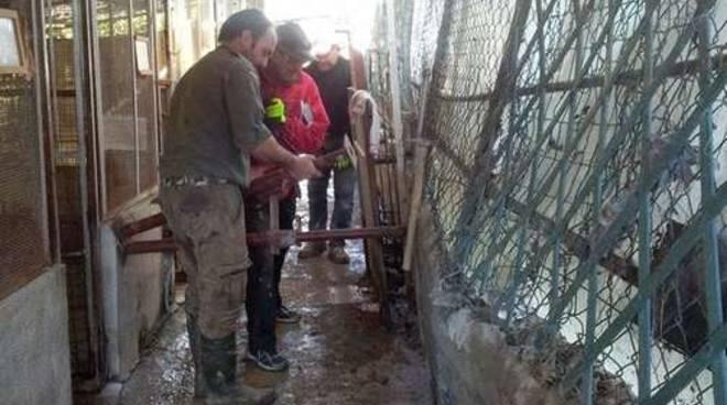 volontari canile la cuccia imperia alluvione nov 2014