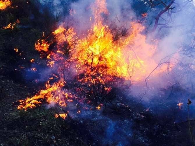 Incendio boschivo andora cervo generica marzo 2015