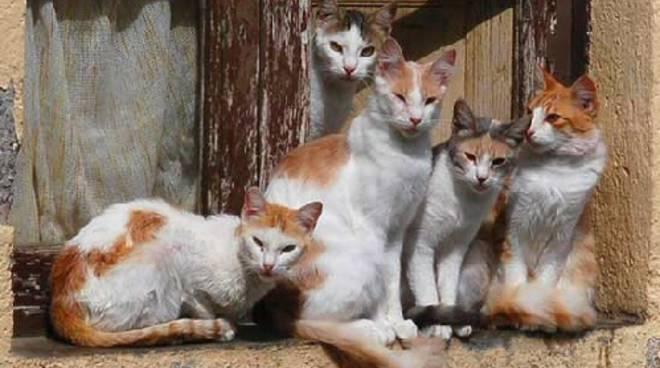 gatti gatto colonia felina