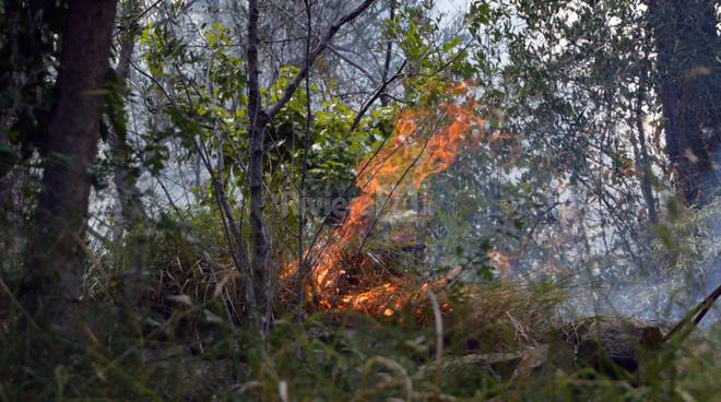 incendio boschivo tasciaire sanremo forestale elicottero 115