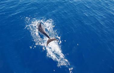 delfini san lorenzo al mare