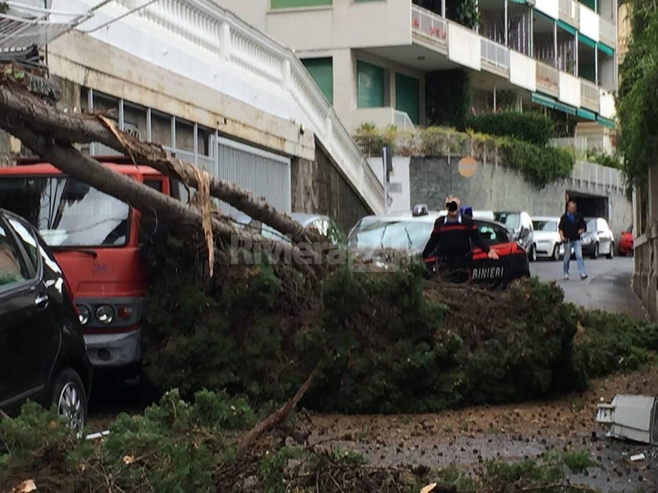 alberi caduti via ascquasciati