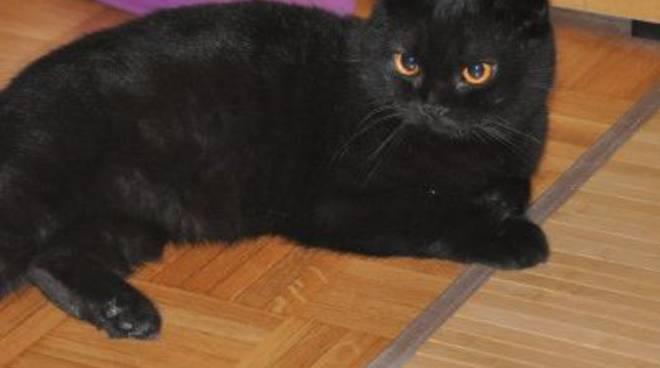 gatto nero perso a bussana