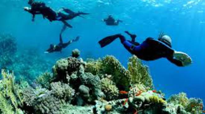 mare marino ambiente fondali immersioni generica