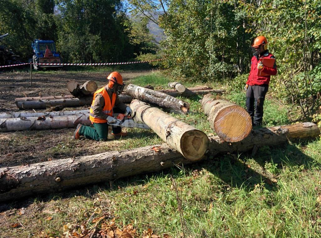 scuola forestale ormea motosega boscaiolo boscaioli