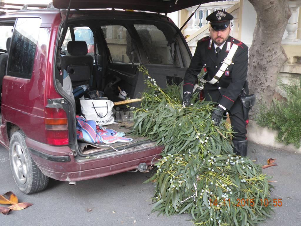 furto piante ornamentali