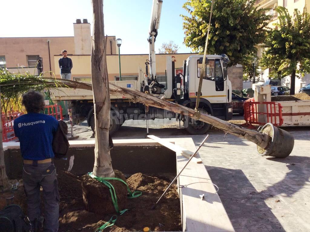 Ventimiglia, in piazza Coppo sono arrivate le tre palme piumose