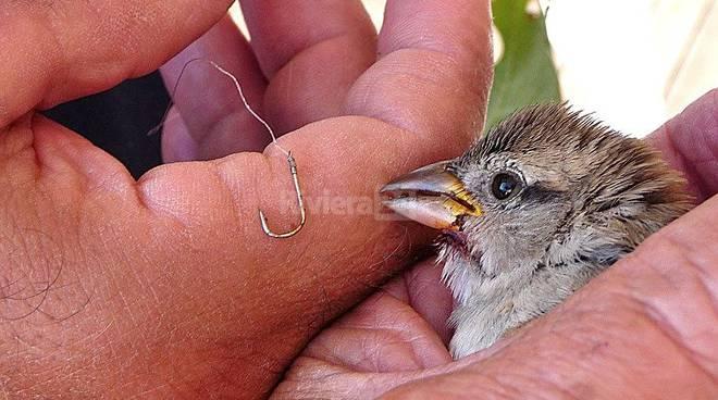 uccellino ferito