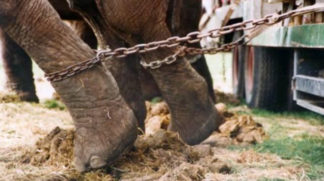 Salerno: niente più schiavitù in scena nei circhi