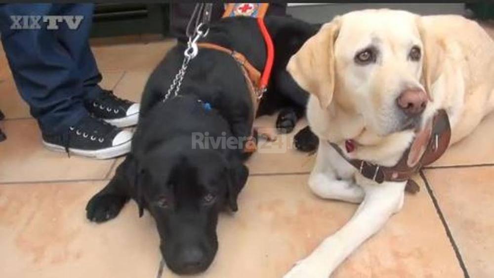 """Civezza in festa con """"spritz"""", il nuovo cane guida di vittorino ..."""