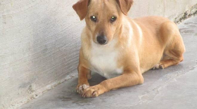 riviera24 - cucciolo cane generica