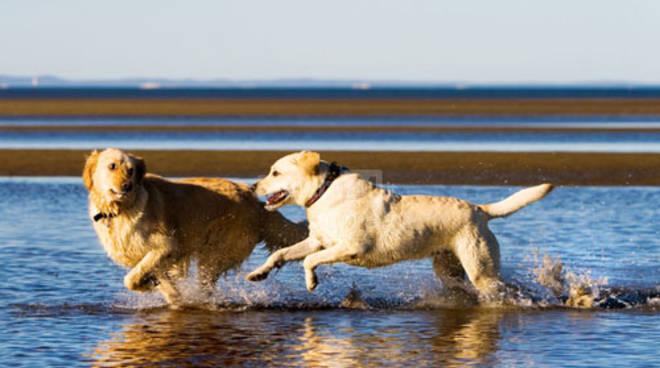 Riviera24 - cane, spiaggia