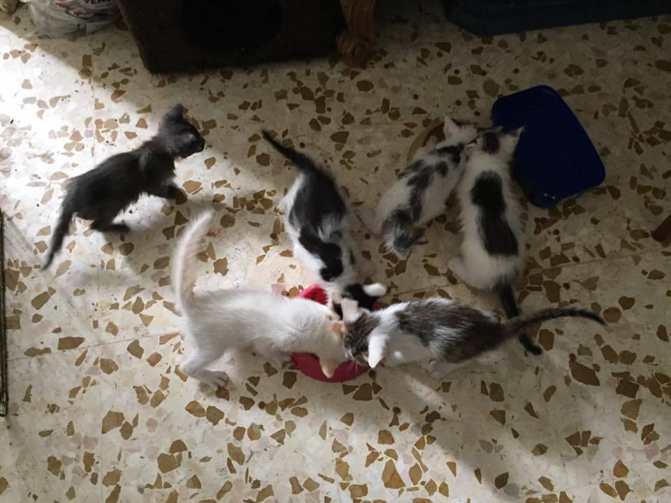 Gatti in adozione