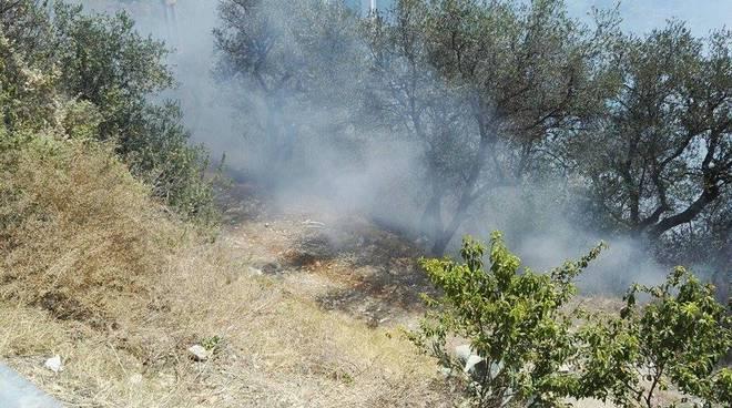 riviera 24 - vigili del fuoco incendio boschivo uliveto terzorio sterpaglie