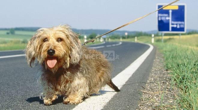 Riviera24 - Cane abbandonato in autostrada