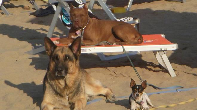 riviera24 - cane cani spiaggia