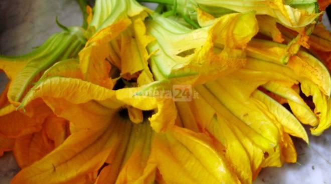 Riviera24 – fiori di zucca, generica