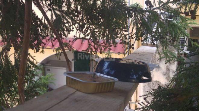 riviera24 - gatto su un albero