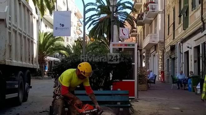 riviera24 - punteruolo rosso imperia abbattimento palme