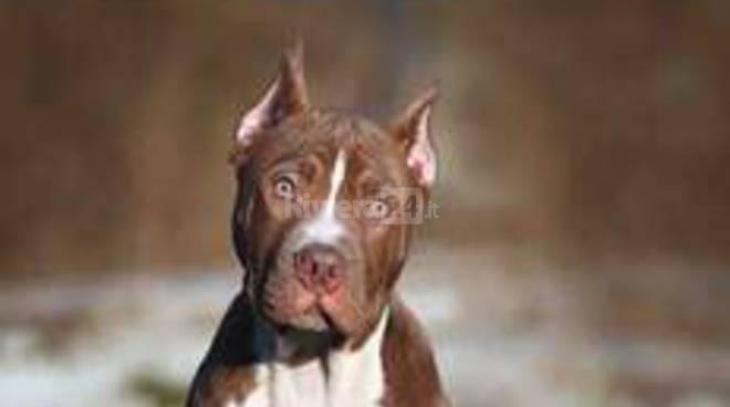 riviera24 -  SOS combattimenti tra cani