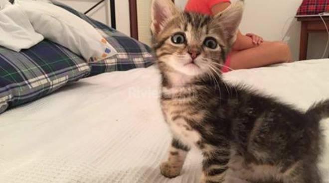 foto gattini