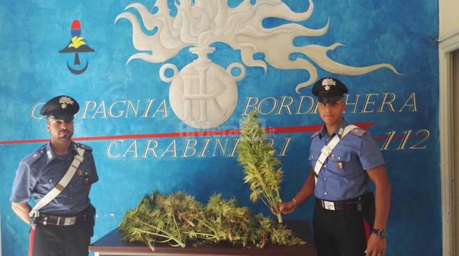 riviera24 - Carabinieri trovano piante di canapa indiana