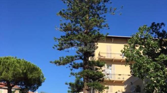 alberi da tagliare bordighera