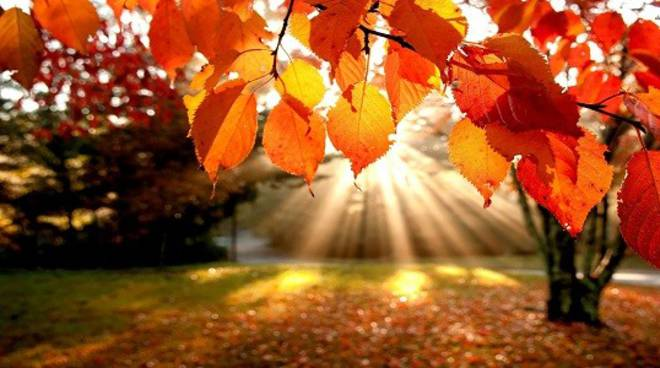 autunno generica