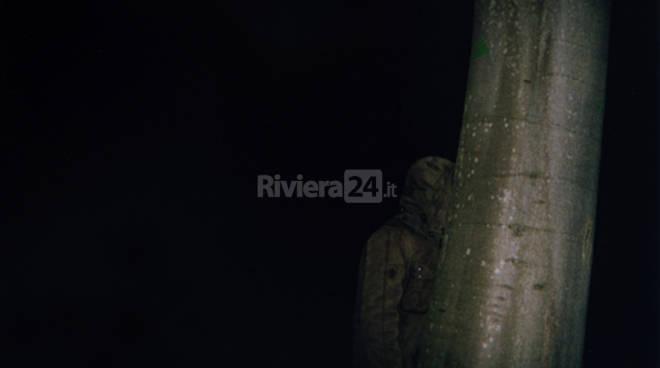 bosco notte