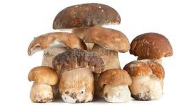 riviera24 - funghi generica