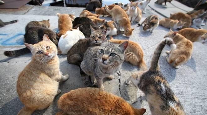 riviera24 - gatti gatto colonie feline generica
