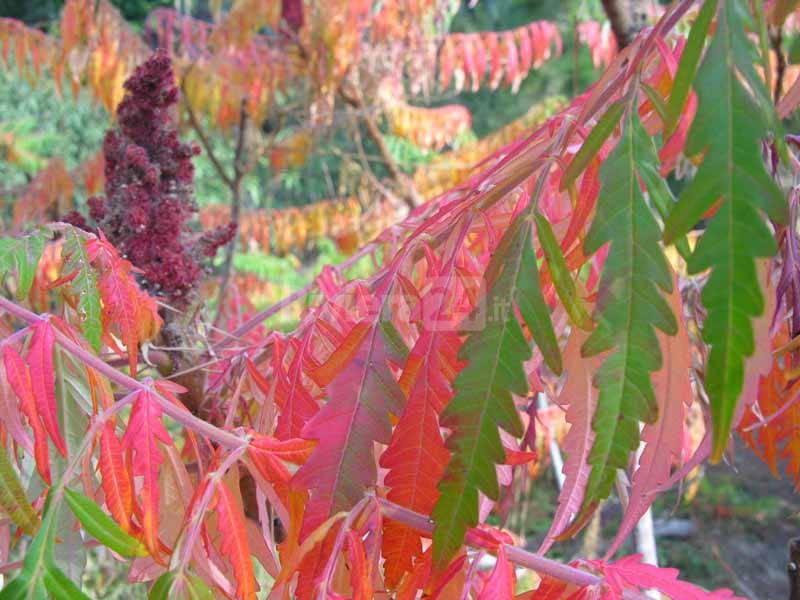 riviera24 - Giardini Botanici Hanbury