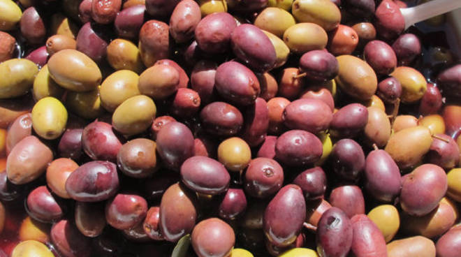 riviera24 - olive taggiasche