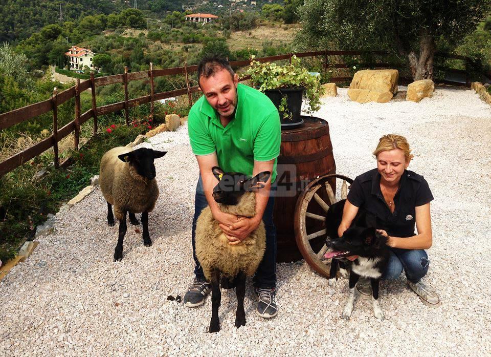 pecore seborga