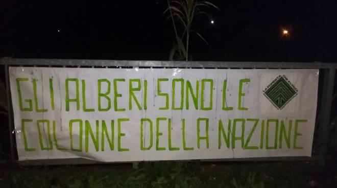 riviera24 - Festa dell'albero