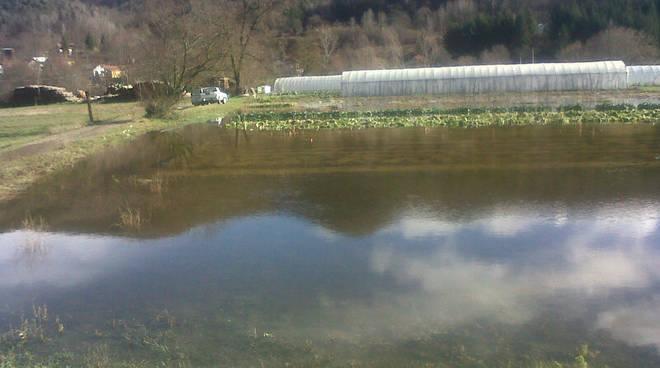 riviera24 - maltempo aziende agricole e campagne generica