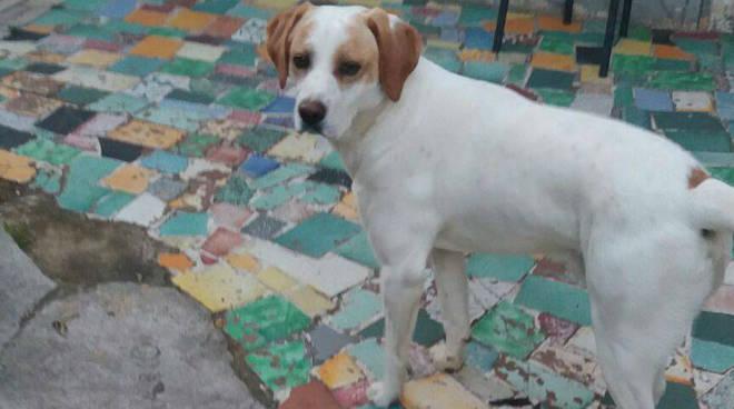 riviera24 - Sanremo, cane scomparso in zona San Giovanni Picchetta