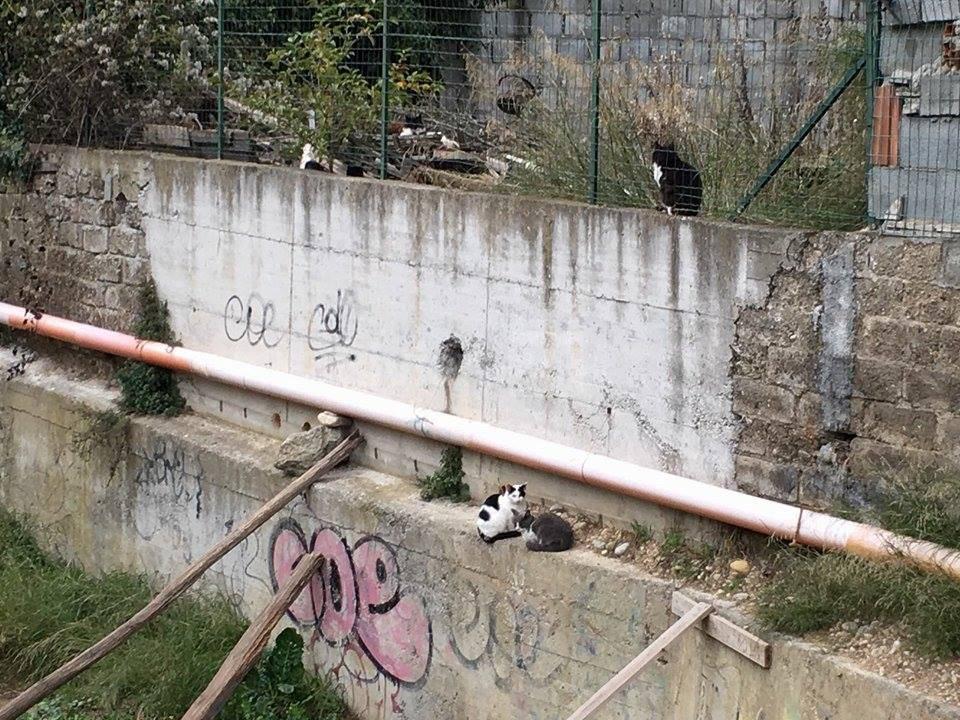 Gatti avvelenati a Camporosso