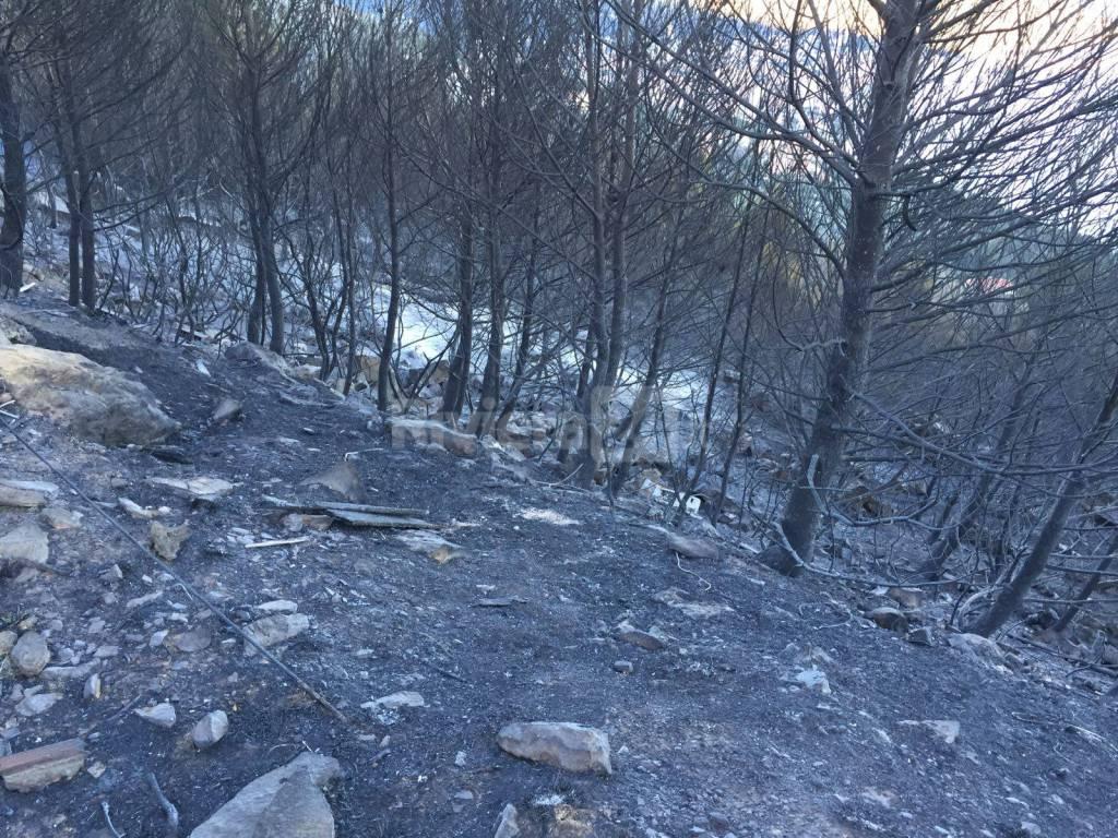 Incendio Cervo